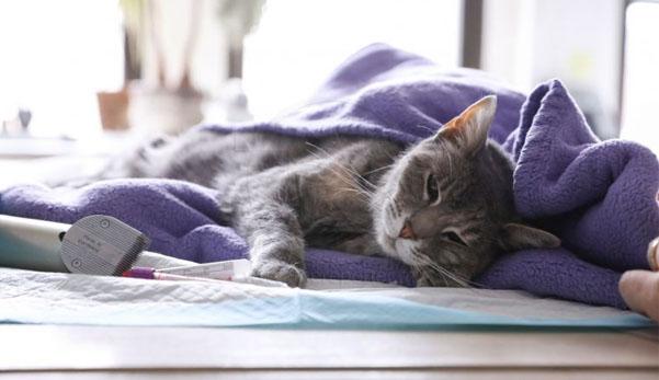 Kucing kedua disahkan positif Koronavirus selepas berjangkit dari pemiliknya